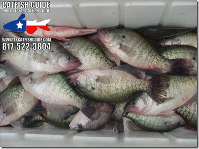 north_texas_catfish_guide_04_2011