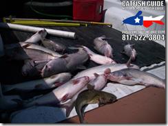 bishop_april_17_north_texas_catfish_guide