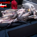 Eagle Mountain Lake Blue Catfish