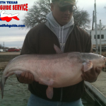 Eagle Mountain Blue Catfish