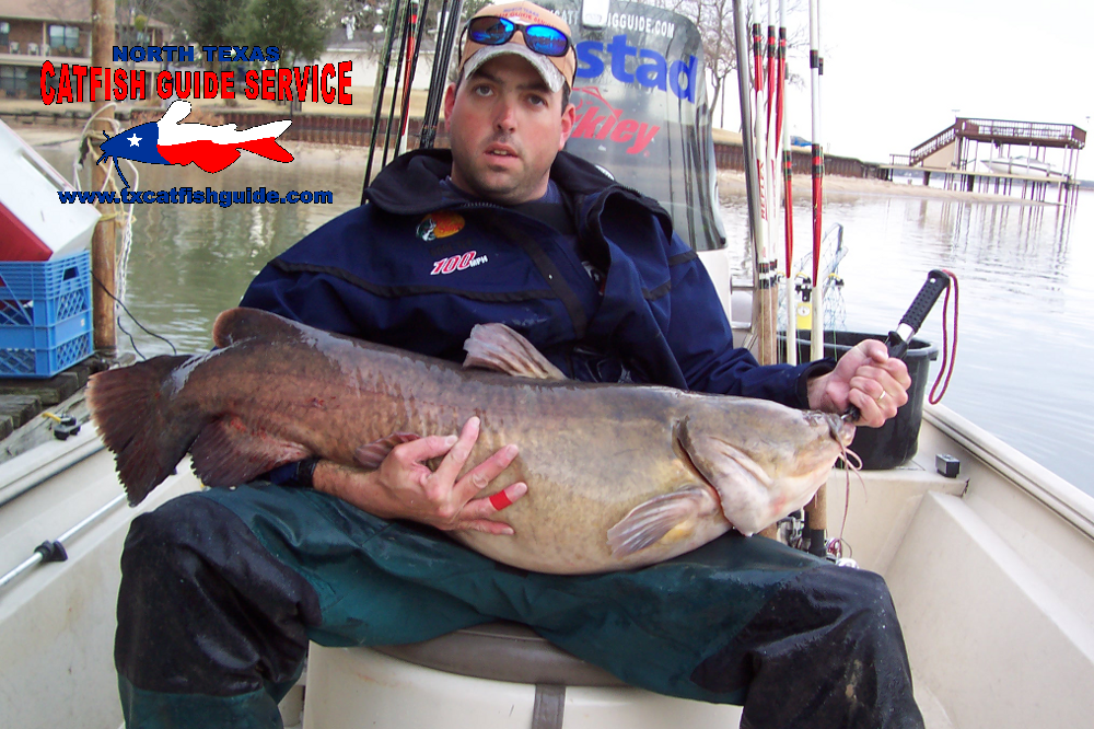 Flathead catfish for Guided fishing trips in texas