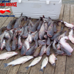 Lake Lewisville Catfish