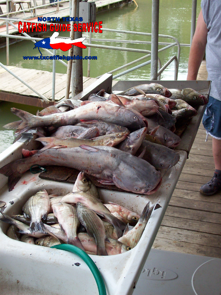 North texas catfish guide service photos for Lake lewisville fishing guide