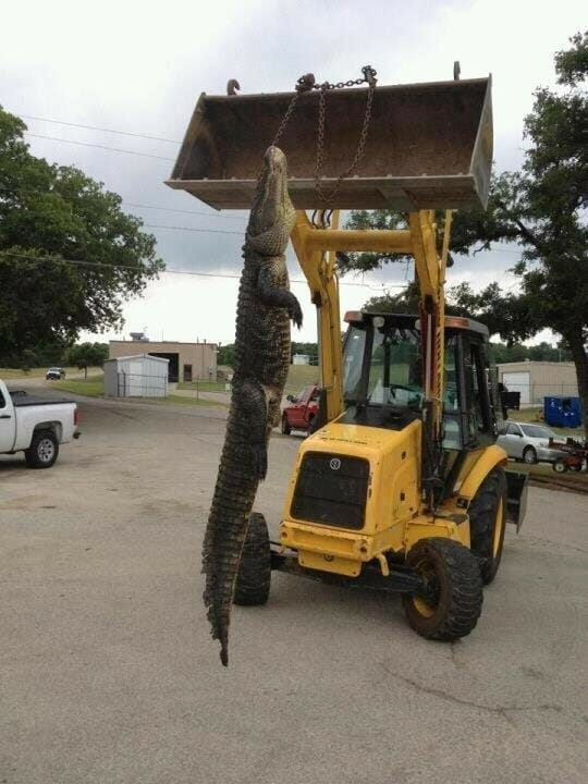 Eagle mountain lake fishing report and the alligator may for Eagle lake texas fishing